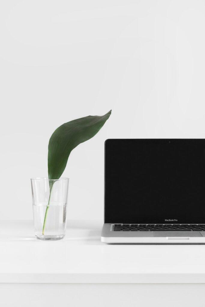 MacBook Pro beside plant in vase